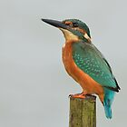Kingfisher - Alcedo atthis by Peter Wiggerman