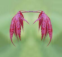 Twin Maple by Alan Gregg