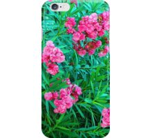 May Flowers In Ft. Pierce, Florida iPhone Case/Skin