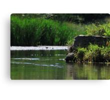 Top Tier Pond at Lisle Community Park Canvas Print