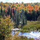 Canadian Autumn Landscape. by vette