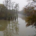 Foggy Bayou by WildestArt