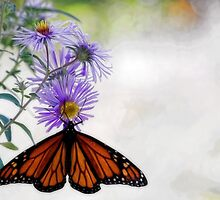 Monarch Butterfly - Migration by T.J. Martin