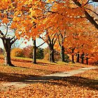 maple trees galore at fall by ANNABEL   S. ALENTON