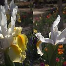 Spring brings them out, Canberra by Tom McDonnell