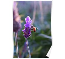 Smelling-bee Poster