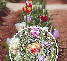 Tulips with Circle Pattern by sgbphotos