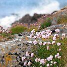 coastal pink wildflowers by morrbyte