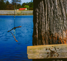 Rope swing hanging from tree above lake Sticker