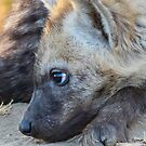 Hyaena pup waiting for mom by Linda Sparks