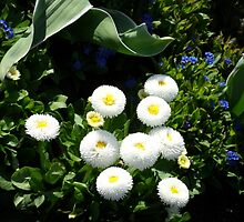 Puffy Whiteness by Lucycles