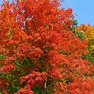 Autumn Red by lorilee