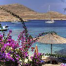 Bougainvillea at Ftenagia by Tom Gomez