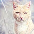 Red Tomcat by Bob Daalder