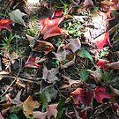 Fallen Leaves by Martha Medford