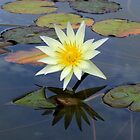 Garden Reflections  by hannahsview