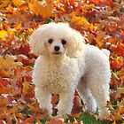 Bella In Autumn Leaves by lorilee