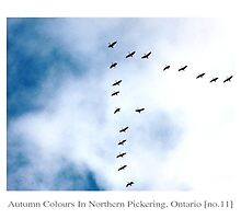 Autumn Colours In Northern Pickering, Ontario - no.11 by Solomon Walker