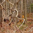 The Lure of the Thicket by Lynda Lehmann