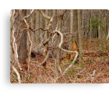 The Lure of the Thicket Canvas Print