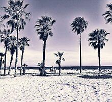 Cali Palms B W by ProjectSpearman