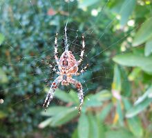 Caught in the web of time by crystalline