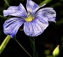 Purple Petals by Tracy Deptuck