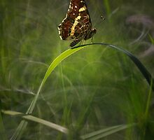 Impression with brown butterfly by JBlaminsky