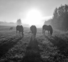 Horse Herd Grazing in a Sunrise Mist by Skye Ryan-Evans