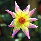 Autumn Bloom by John Dalkin