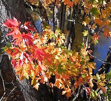 Autumn Colours by Martha Medford