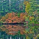 Autumn reflection 2 by Carolyn Clark
