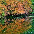 Autumn reflection 3 by Carolyn Clark