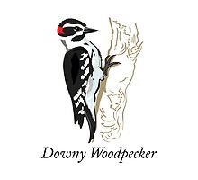 Downy Woodpecker by Eggtooth