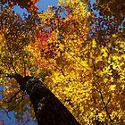 Hot Autumn Palette by Georgia Mizuleva