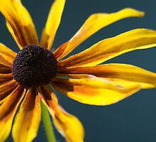 Yellow Daisy by shadownlite
