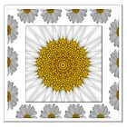 Daisy framed kaleidoscope by Jan  Tribe