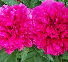 Grandmother's Peonies: The Couple SDL  by sherrie-larch