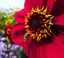 Busy Buzzy Business by Abigail Carpenter