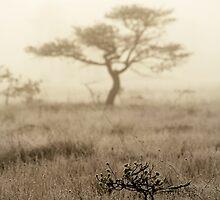 1.10.2014: Dancing Tree by Petri Volanen