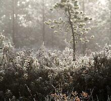 1.10.2014: Autumn Colours by Petri Volanen