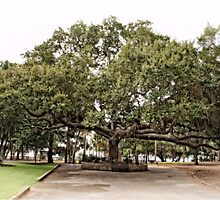 This Old Oak Tree  by LarryB007