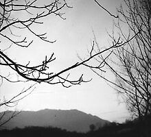 Autumn by eleonorargg