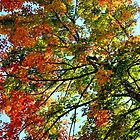 The Glory of Autumn IV by Kathleen Daley