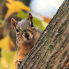 You're not the nut I was looking for! by Keala