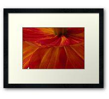 Orange Zinnia Flower Petals - Macro  Framed Print