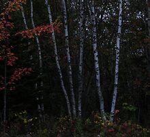 Autumn by lumiwa