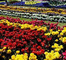 Flower Gardens Toowoomba Queensland Australia by Sandra  Sengstock-Miller