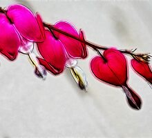 Bleeding Hearts by Tracy Deptuck