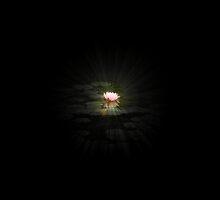 LotusGlow by whitemountain